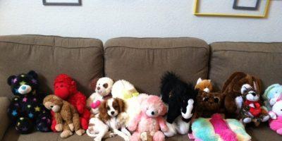 Hangi hayvanlar oyuncakları çok sever