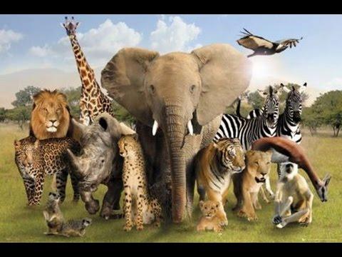 Dünya'nın En Zeki Hayvanları ve Özellikleri