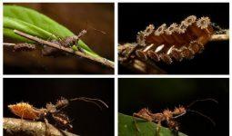 İnsanları öldüren böcek türleri