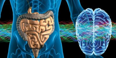 Bağırsaklarda Zararlı Bakterileri Yok Etme Yöntemleri