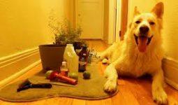 Evcil hayvanlarınız için evde doğal kene ve pire tozu yapımı