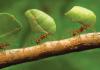 Karıncalardan Kurtulmanız İçin 10 Pratik Yöntem