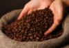 Brezilya Kahvesi Nedir Kimler Daha Çok Kullanır Nasıl Yetiştirilir.