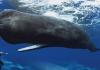 Dünyada Kaç Çeşit Deniz Canlısı Vardır?