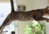 Kedi Bakmanın İncelikleri Nelerdir?