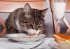Evde Kedi Beslemek Nasıl Olur?