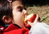 Çocuklarda Alerjiye Daha Çok Sebep Olan Besinler
