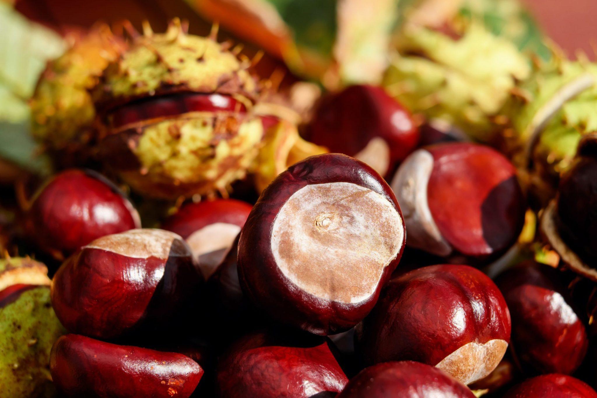 Kestanenin Sağlığımıza Yararları