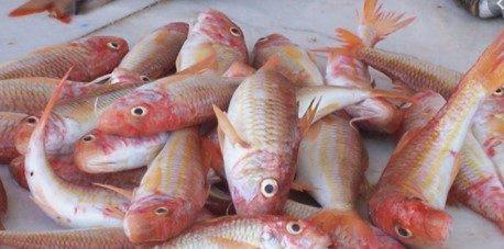 Balık Tüketmek Neden Gereklidir